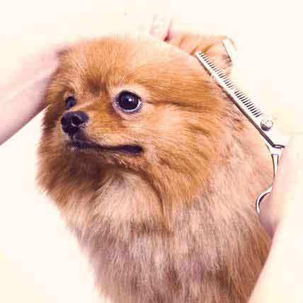 Small Dog Grooming