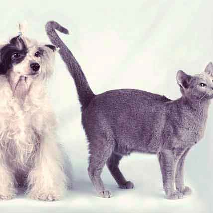 All About Spaying and Neutering Dogs and Cats