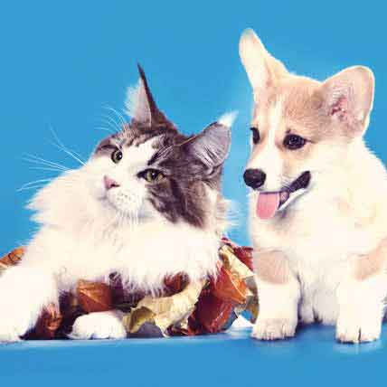 Symptoms of Cancer in Dogs and Cats