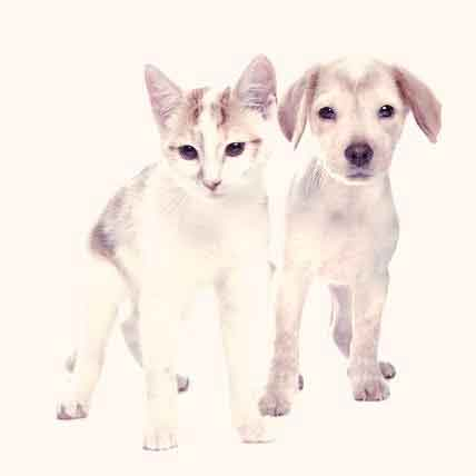 Symptoms of Allergies in Cats and Dogs