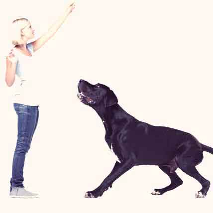 How to Teach Your Dog to Jump On and Off