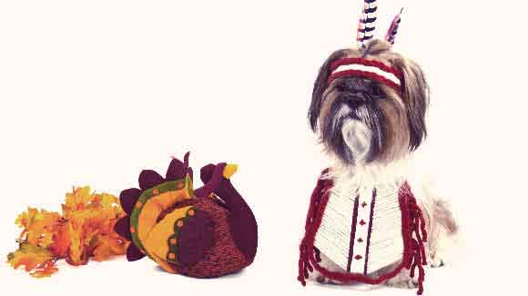 Thanksgiving Pets 101: The Cutest Costume Ideas and Tips