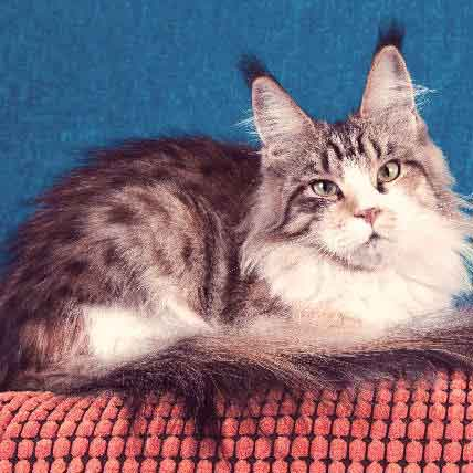 The Top Cat Breeds in the U.S.