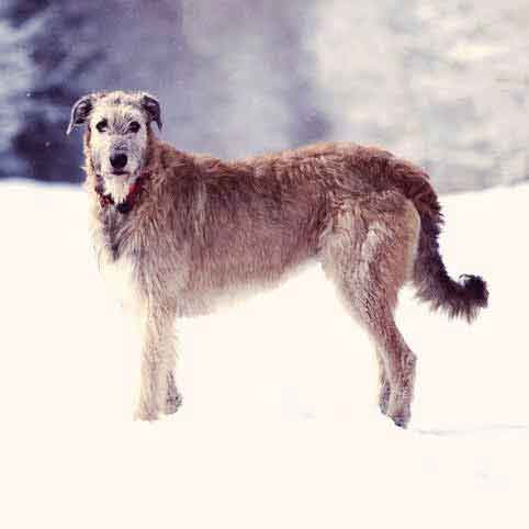 Top 5 Winter Nutrition Tips for a Healthy Dog