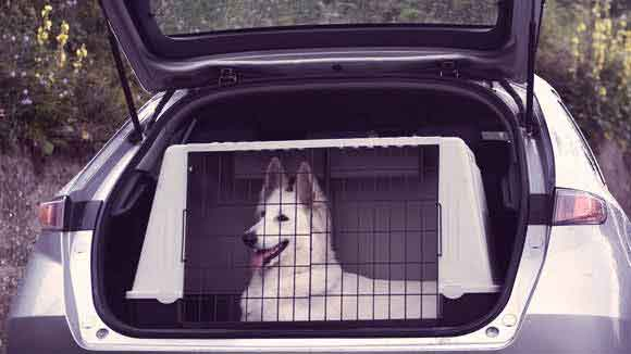 How to Train Your Dog to Load into Your Car