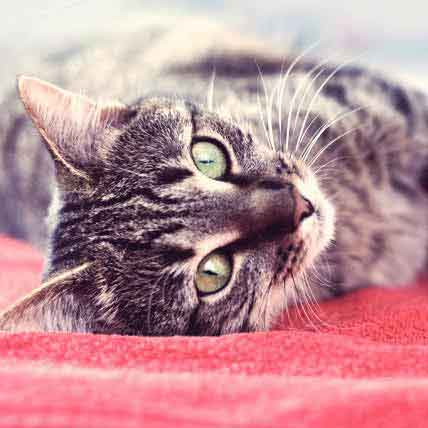 Treating Your Cat or Dog's Ear Mites