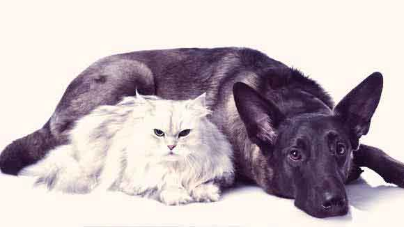 Treatments for Cancer in Dogs and Cats