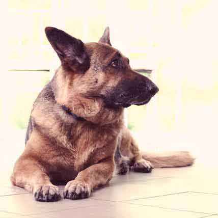 What Causes Anxiety in Dogs?