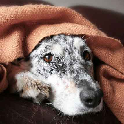 What To Do About Dog Flatulence