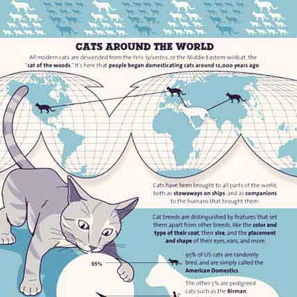 Where Cat Breeds Come From Infographic