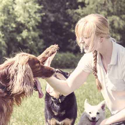 Which Type of Dog Behaviorist or Trainer Do You Need?