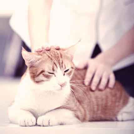 4 Common Causes of Heart Failure in Cats
