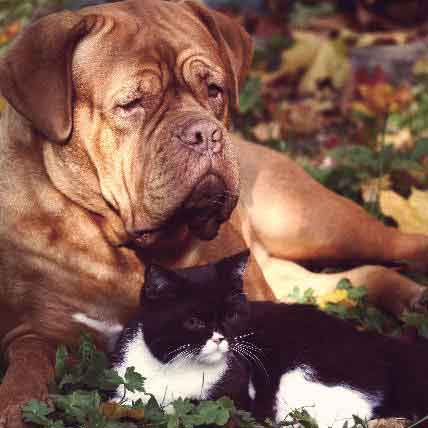 Hemangiosarcoma in Dogs and Cats