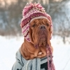 How to Dress Your Dog for the Seasons