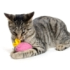 Toys Your Cat Will Love