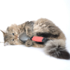 The Cat Brush Buying Guide