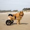 A Normal Life for Dogs with Disabilities