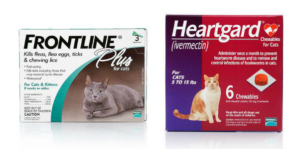 frontline-for-cats