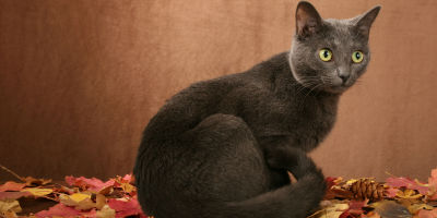 GrayCat-LeukemiaHealthArticle-Symptoms