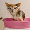 Grooming Tips to Keep Your Dog Healthy and Clean