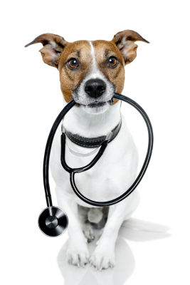 5-things-pet-insurance