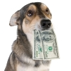 Fitting All Your Pet Care Needs into a Budget