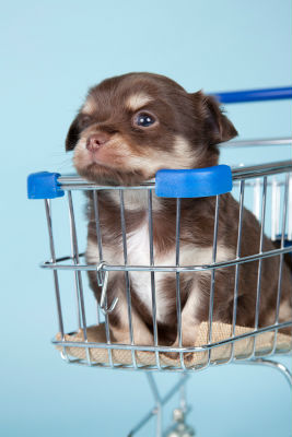 puppy-buying-guide