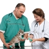 How to Find the Right Vet