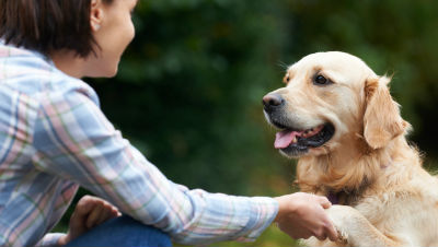 dog-training-tips