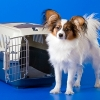 Best Pet Carriers for Traveling
