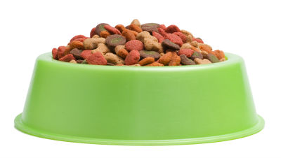 ash-dog-food