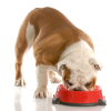 The Best Dog Bowl or Cat Dish for Your Pet