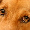Cat and Dog Eye Care Buying Guide