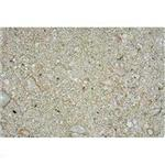 Carib Ocean Direct Natural Live Sand