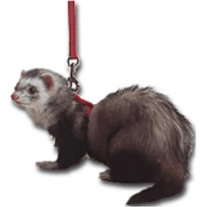 Marshall Presents Ferret Harness and Lead Set Black. Made with 3/8'' Sturdy Flat Nylon and Fully Adjustable, Designed Specifically for the Anatomy of Ferrets. Quick Snap Buckles to Facilitate Putting on and Taking Off. Fully Adjustable to Fit all Size Ferrets. Includes 48'' Matching Lead. [14768]