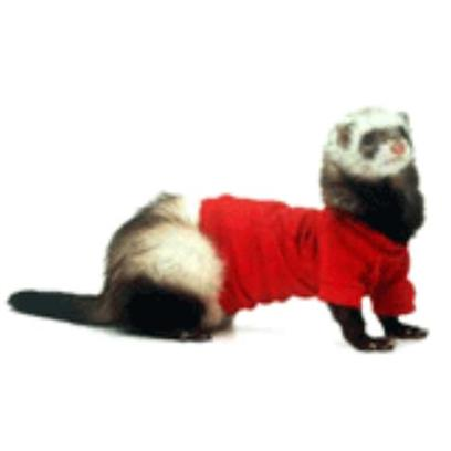 Marshall Presents Ferret T-Shirt Red Small. Dress your Ferret for any Casual Occasion with this Great Line of T-Shirts. Features a Ferret Logo on the Back. [14776]