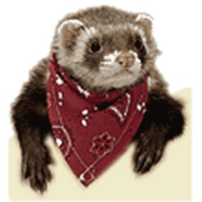 Marshall Presents Ferret Bandana American Flag. Bandanas are a Great Way to Give your Ferret some Style and Attitude. [14781]