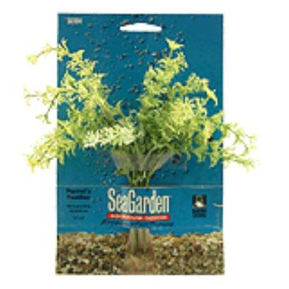 Buy Penn Plax Decor products including Seagarden Nesaea Stands 13'', Seagarden Hairgrass Stands 10'', Seagarden Ludwigia Stands 13'', Seagarden Nesaea Stands 10'', Seagarden Aponogeton Stands 10'', Seagarden Hairgrass Stands 7.5'', Seagarden Red Arrowhead Stands 13'', Gargoyle Column 4'' X 3.5'' 8'' Category:Decor Price: from $2.99