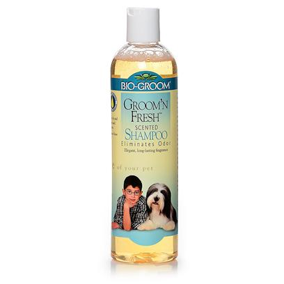 Bio Groom Presents Groom and Fresh Shampoo 12oz. The Unique Fragance in Groom 'N Fresh has been Specially Selected from the Finest Most Prestigious Perfume Oil in the World. This Mild, Soap Free Natural Shampoo Cleanses Thoroughly, Effortlessly, without Stripping Natural Protective Oils from Skin and Coat. [19908]