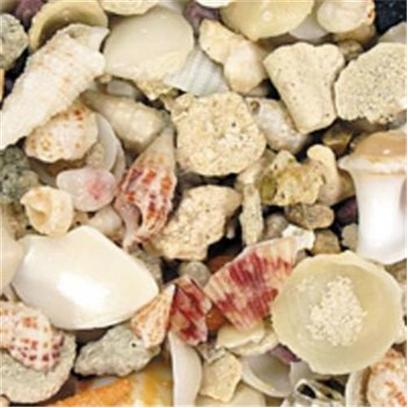 Carib Sea Presents Carib Aruba Shell 18lb. Actual Sea Floor Mix Taken from Ocean Depths-Mix of Sand & Shells [31214]