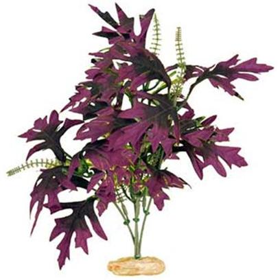 Buy Blue Ribbon Plants products including Blue Ribbon (Br) Plant African Sword Large, Blue Ribbon (Br) Plant Amazon Butterfly Large, Blue Ribbon (Br) Plant Broad Leaf Cluster Large, Blue Ribbon (Br) Plant Flowering Willowlf Large, Blue Ribbon (Br) Plant Broad Leaf Cluster Small Category:Plants Price: from $1.99