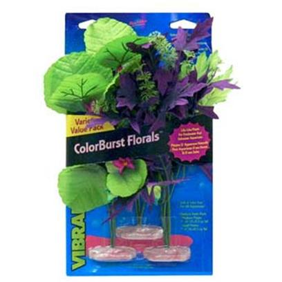 Blue Ribbon Presents Plant-Amazon &amp; African Clusters Plant-Multipack Sword Foxtail Cluster. Br Colorburst Plants Medium Variety Pack - Amazon Flowering Cluster Includes 1 Each of the Following Amazon Butterfly Leaf with Buds, Broad Lily-Leaf with Flowering Buds, Melon Leaf Cluster with Flowering Buds [33290]