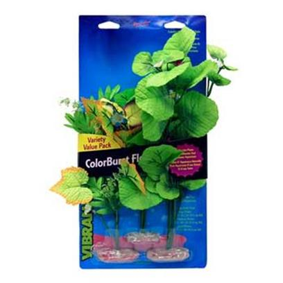 Blue Ribbon Presents Plant-Broad Leaf Cluster Flowering Multipack. Br Colorburst Plants Large Variety Pack - Broad Leaf Flowering Cluster Includes 1 Each of the Following Broad Lily-Leaf with Flowering Buds, Flowering Willow Leaf, Flowering Wild Fern Cluster [33292]