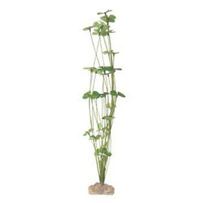 Buy Planted Aquarium products including Instant Ocean-Aquarium Systems (Io) Seagarden Caulerpa Mexicana Large, Instant Ocean-Aquarium Systems (Io) Seagarden Acet Calyculus Medium, Instant Ocean-Aquarium Systems (Io) Seagarden Haloph Engel Large (Lg) Category:Plants Price: from $2.99