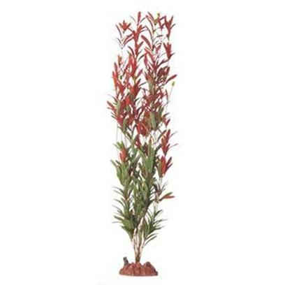 Buy Seagarden Nesaea products including Seagarden Nesaea Stands 10'', Seagarden Nesaea Stands 13'', Instant Ocean-Aquarium Systems (Io) Seagarden Fw Nesaea 24' Bi-Color Category:Decor Price: from $5.99