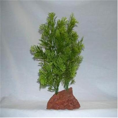 Rocky Mountain Plants Presents Rocky 2 Green Lava Plant #Rm-3 Double Small 4-5' on Rock. Mounted on Solid Weighted Bases Make these Plants Suitable for the Aquarium or Terrarium. Green Eel Grass 12&quot;-13&quot; on White Rock. Green 9&quot;-10&quot; [33378]