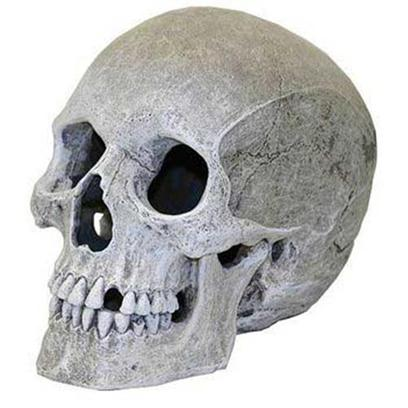 Blue Ribbon Presents Blue Ribbon (Br) Lifelike Human Skull. Ablee358 Reaslitically Hand-Textured and Life-Like Human Skull - Safe for all Aquariums &amp; Terrariums 5 X 7.5 X 6 [33956]