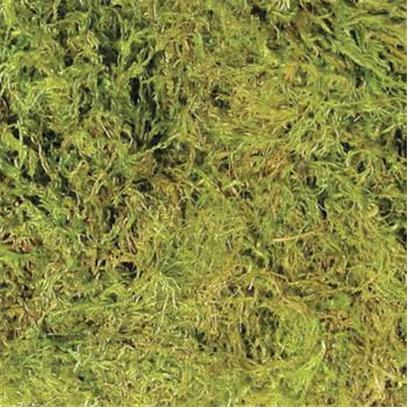 Zoo Green Green Terrarium Moss - Large (15 To 20Gal)