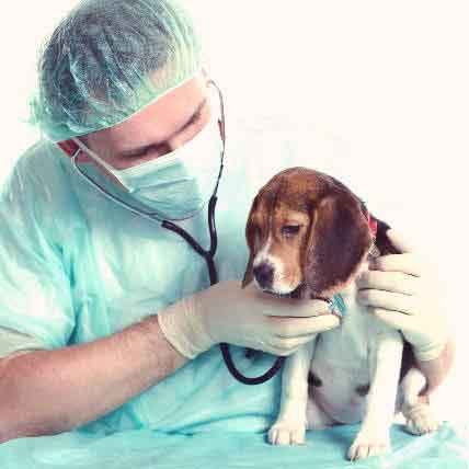 4 Common Causes of Heart Failure in Dogs