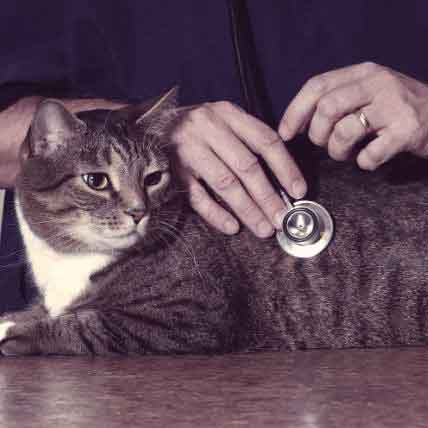 The 4 Most Common Causes Of Cat Renal Failure